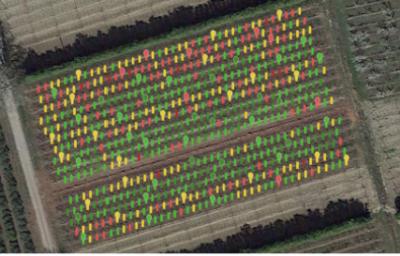 cclair-agriconnect-technivue-densite-floraison-pommier
